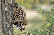Asilia Africa luxury tanzania safari
