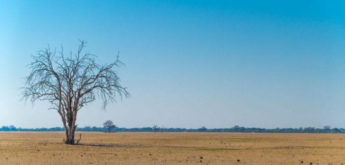 Wilderness Safaris Lightfoot Travel Safari Botswana Zimbabwe