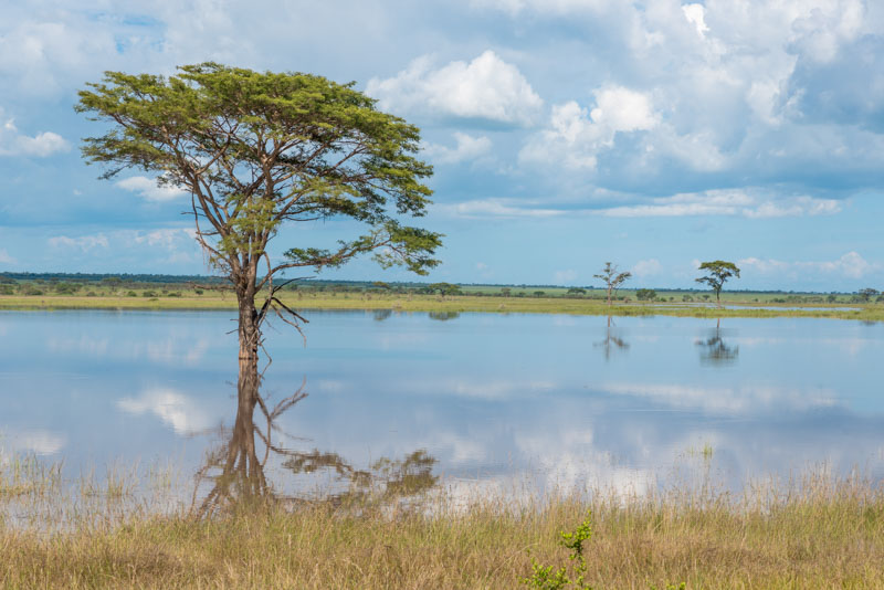 Transcending national borders and points on a map, the Serengeti is a vast, vibrant ecosystem that comes to life with the arrival of the rainy season.